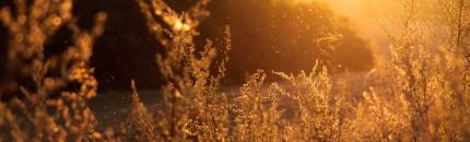 10 Consells per  alleujar els símptomes de l'al•lèrgia primaveral