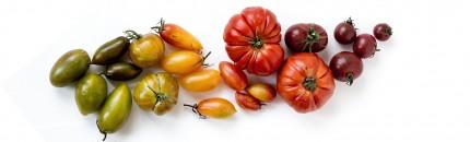 La alimentación: un factor evolutivo clave en la historia del ser humano