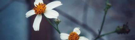 Primavera: el maldecap per als al•lèrgics al pol•len
