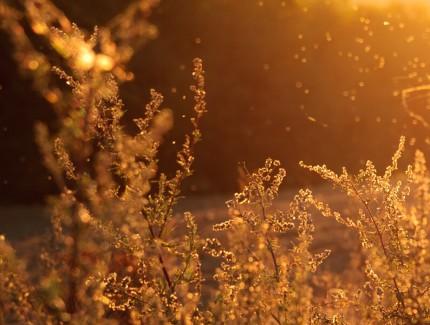 10 Consejos para aliviar los síntomas de la alergia primaveral