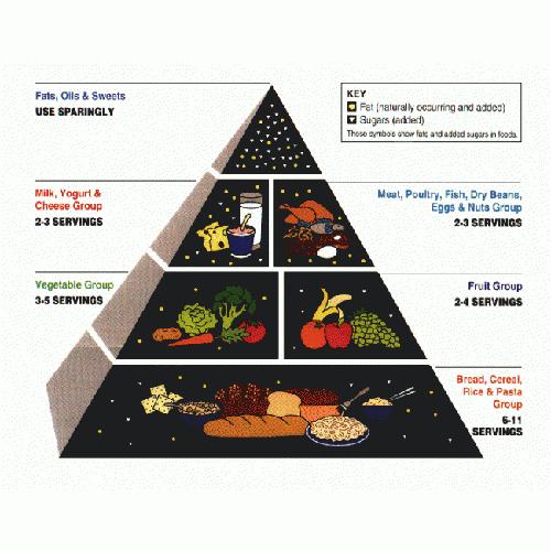 La pirámide nutricional: un factor evolutivo clave en la historia del ser humano