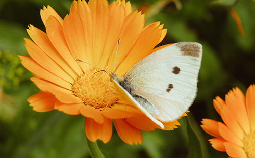 Múltiples usos terapéuticos de las flores de temporada
