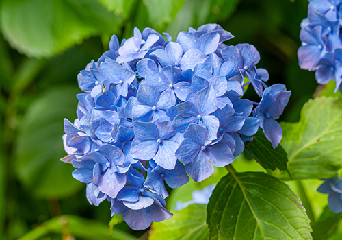 Flors de temporada per a conrear a primavera i a casa