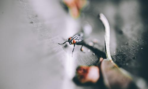 Tot el que necessites saber sobre les picades de mosquits
