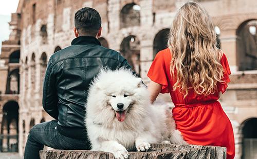 6 de cada 10 confiesan a sus animales de compañía cosas que no cuentan a nadie más.